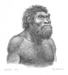 Artist's rendition of newly unveiled human ancestor, Homo. (J. H. Matternes)