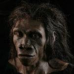 Ancestral Homo erectus