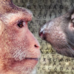 A rhesus macaque and a Tasmanian devil.