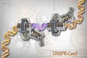 CRISPR is one of three gene-editing approaches that uses enzymes as molecular scissors. (NHGRI)