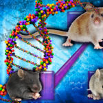 Gene Expression in Mice