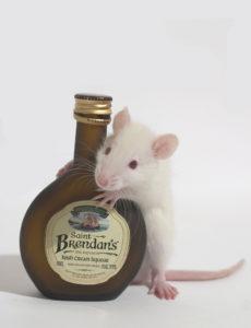 Alby_the_white_rat_holds_irish_cream