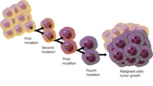 For many cancers, the sequence of driver mutations is well known.
