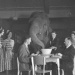 Elephant's_tea_party,_Robur_Tea_Room,_Sydney,_24_March_1939_-_Sam_Hood_(3529604677)