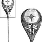 Figure-1-Drawing-of-a-homunculus-by-Nicholas-Hartsoeker-a-famous-misperception-of
