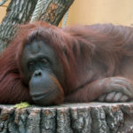 Zoo_z01